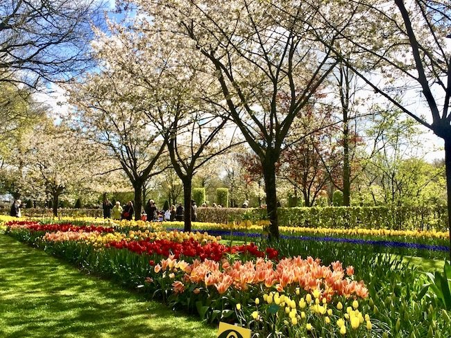 Amsterdam e i tulipani in fiore (parte due)